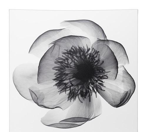 Zwart wit schilderij