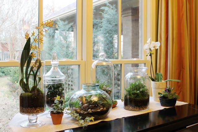 Zelf planten terrarium maken