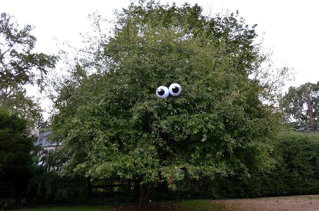 eyeballs-in-tree