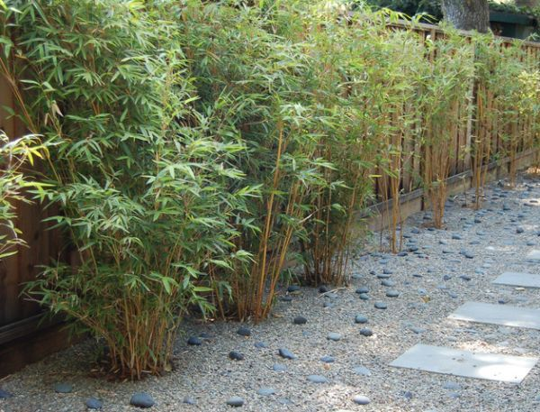 outdoor-bamboo-fence