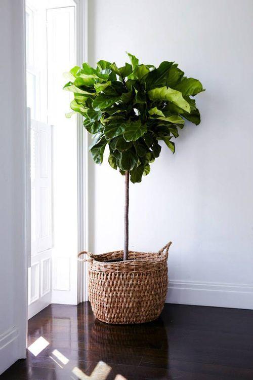 Plant in huis — InteriorInsider.nl