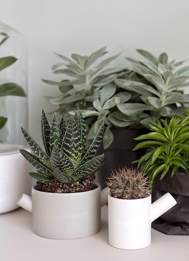 Wil je nog meer inspiratie voor het gebruik van vetplantjes in je ...
