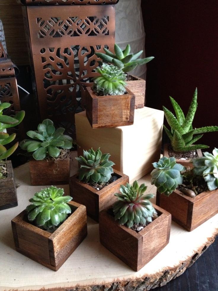 Vetplanten in huis interieur insider for Interieur decoratie online shop