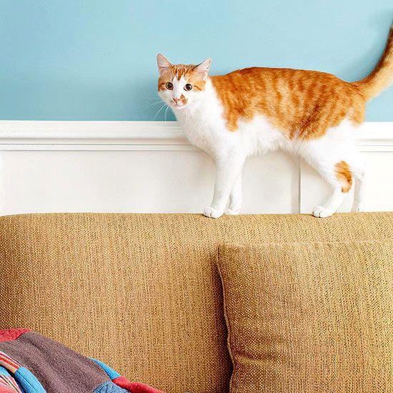 Tips woning met huisdieren