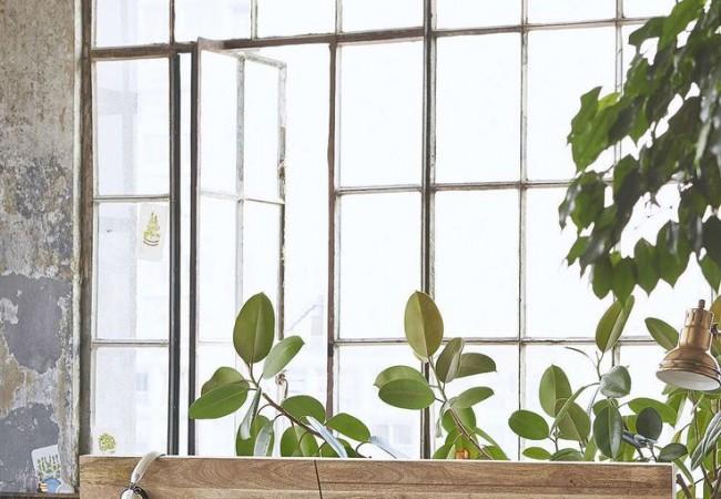 Plant Slaapkamer : Plant in slaapkamer