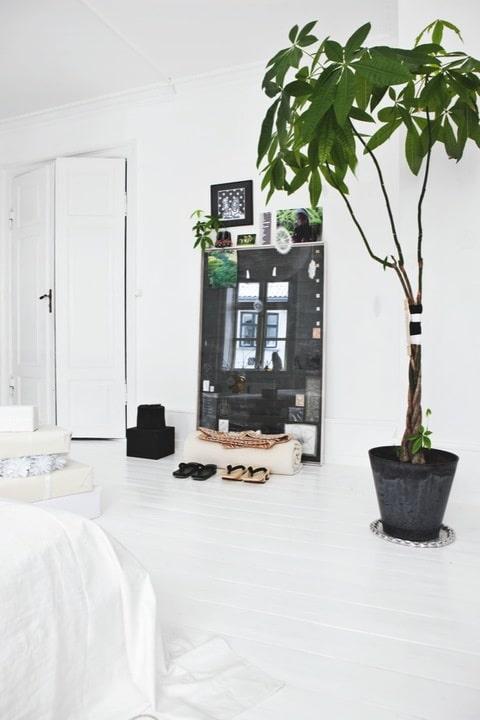 ... slaapkamer plant in huis plant in kamer plant in slaapkamer plant in