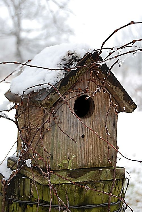 Winter vogelhuisjes