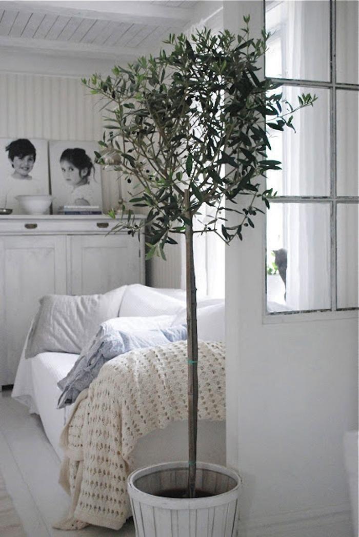 Klein boompje in huis
