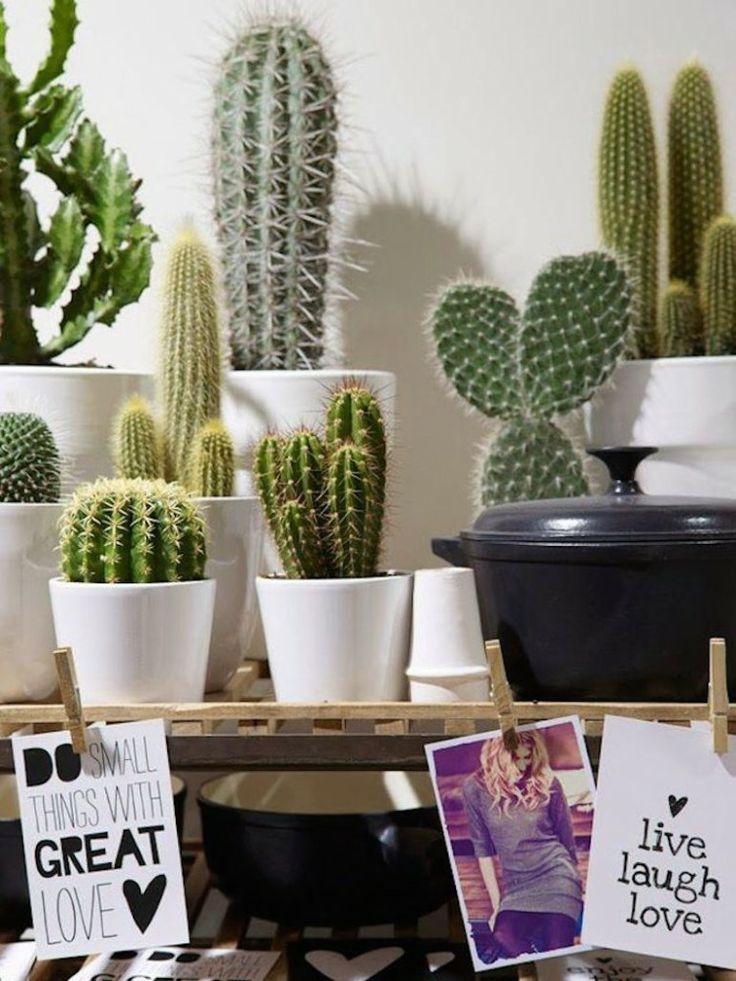 Cactussen in huis - Mooie interieurdecoratie ...