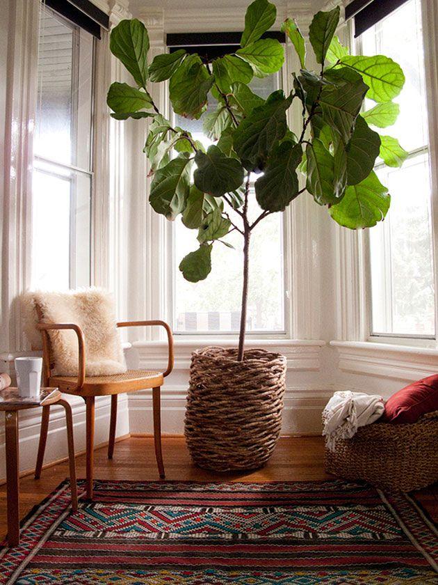 Grote kamerplanten interieur insider for Grote kamerplanten