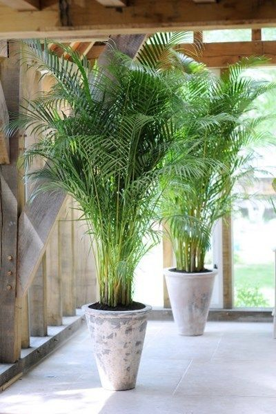 Grote kamerplanten - Interieur Insider