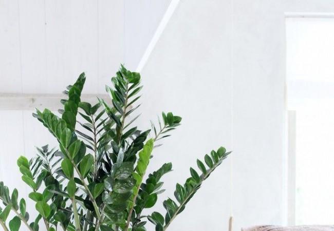 Grote Plant Slaapkamer : Planten in badkamer en slaapkamer