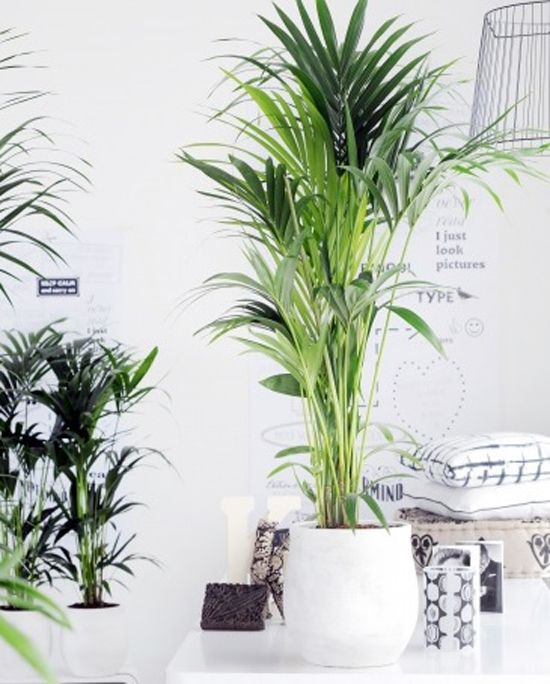 Grote kamerplanten — InteriorInsider.nl