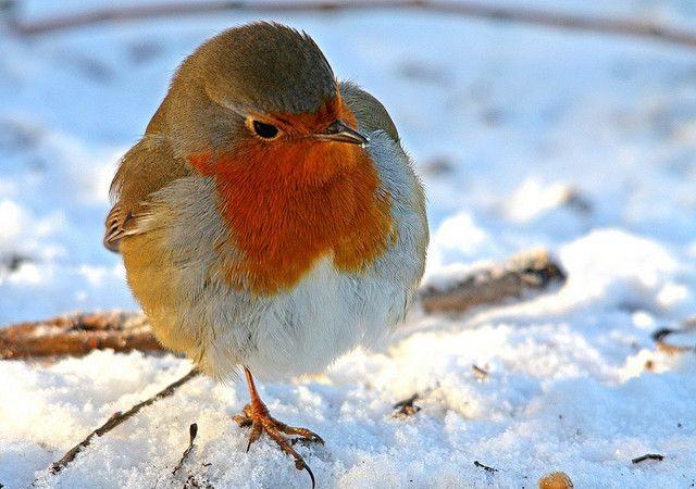 voedsel ketting vogels Archieven - Interieur Insider