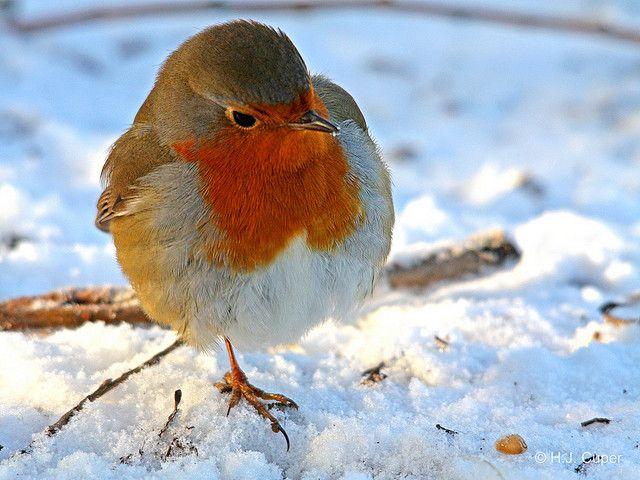 Vogels in je wintertuin