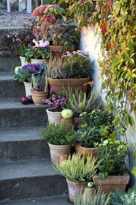 Idee bloempotten for Plant de pot exterieur