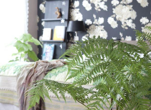 Planten Op Slaapkamer: Slaapkamer geluk ervaring gezocht exotische ...