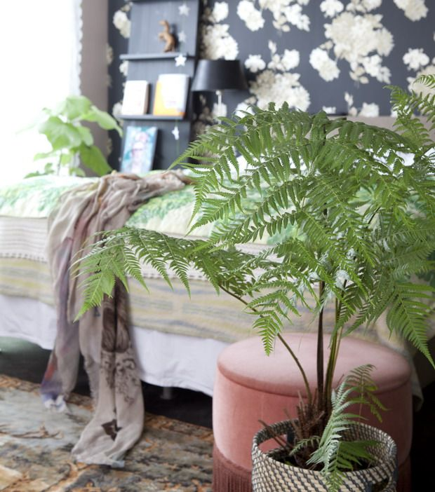 Planten in badkamer en slaapkamer