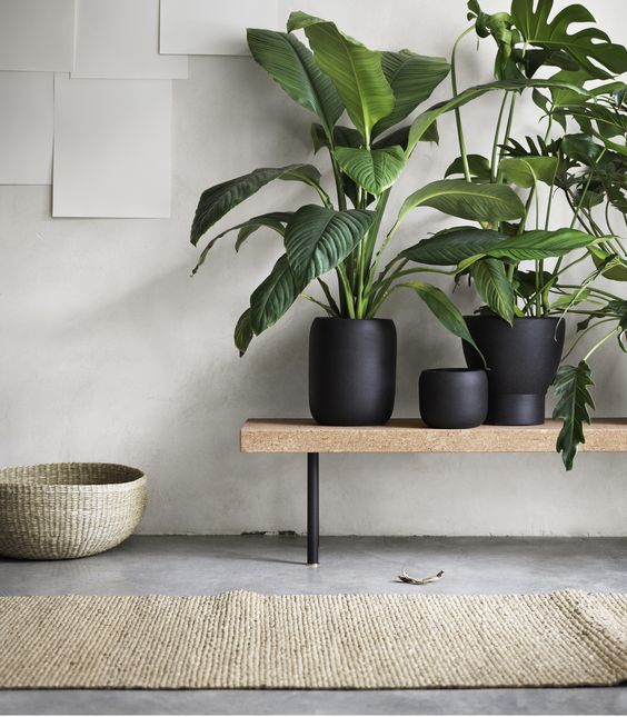 woonkamer planten