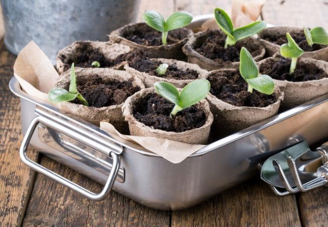 Kleine plantenpotjes