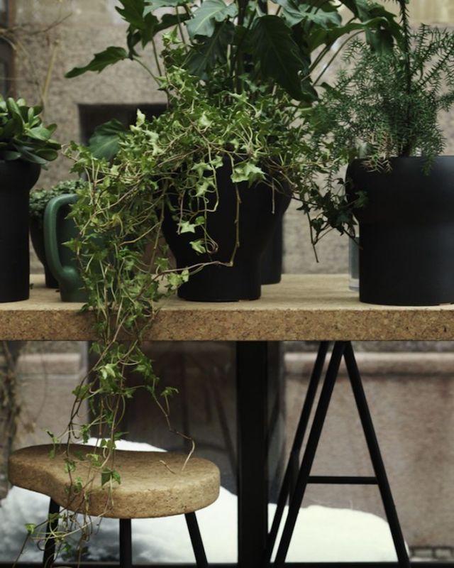 Kurk en planten woontrends 2017