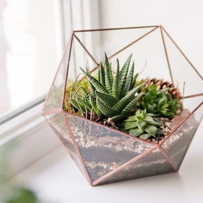 Vetplanten in huis