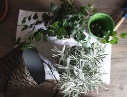 Kamerplanten verzorgen: Zo overleven ze het!