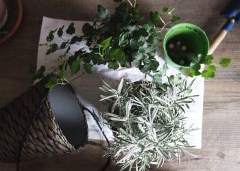 kamerplanten verzorgen tips