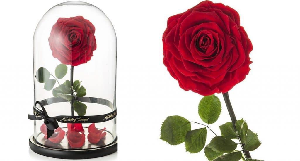 roos in glazen stolp belle beest