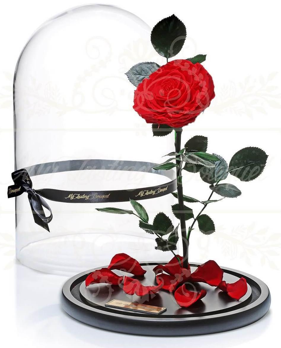 roos in stolp kopen belle en het beest