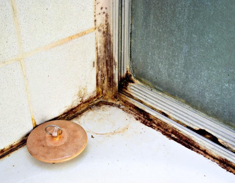 Schimmel in huis verwijderen doe je zo! | Tips en informatie