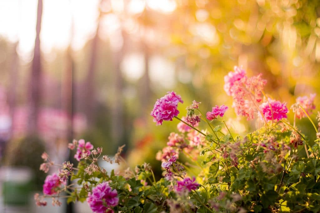 Bloemen in een sfeervolle tuin