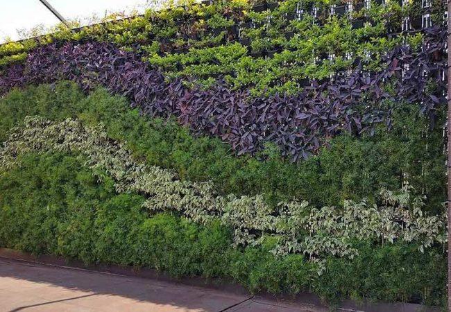 Verticale tuin aanleggen