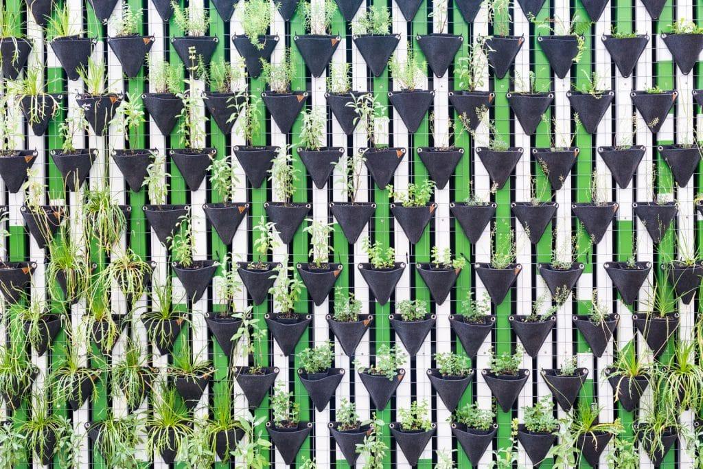 strakke verticale tuin aanleggen
