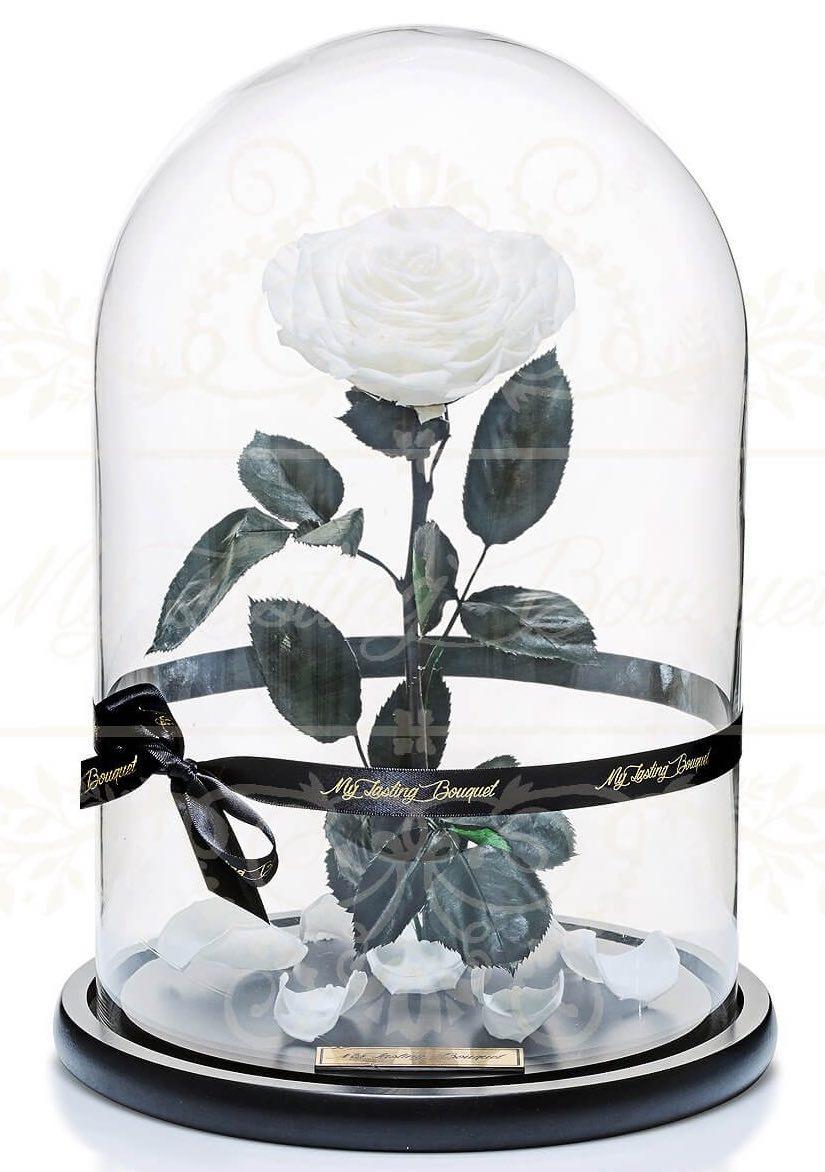 witte roos in stolp kopen